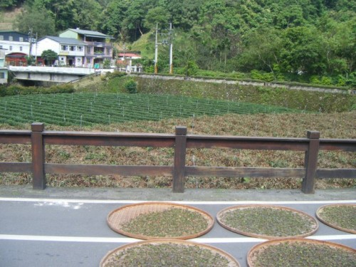Some of the tea fields and tea drying in the sun we saw while riding bikes.