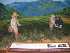 An example of tea harvesting in the Tea Museum in Ping Lin.