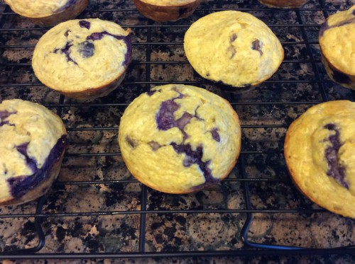high protein blueberry muffins on cooling rack